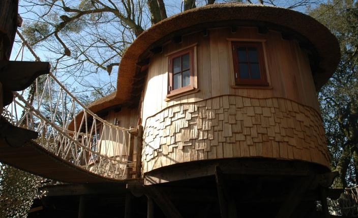 Treehouse 8d