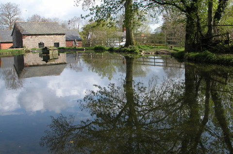 AAA Mill Pond Philip Halling
